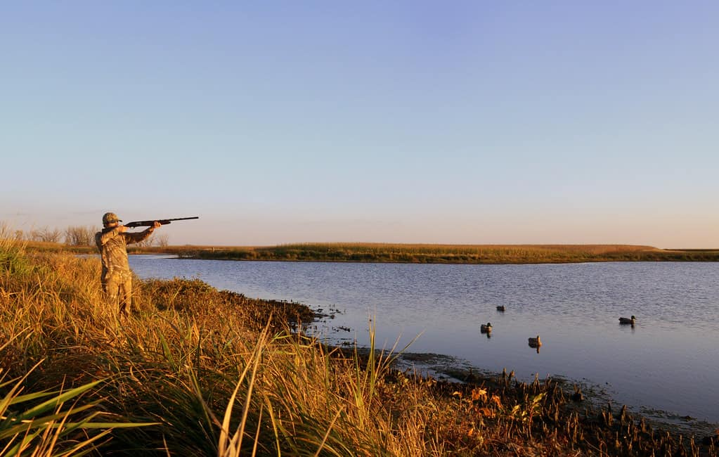 waterfowl hunting guide for beginner